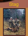 red deer hunting, red deer hunts, deer hunting guides, deer hunting, outfitters