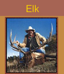 elk hunting guides, elk hunting colorado, elk hunts